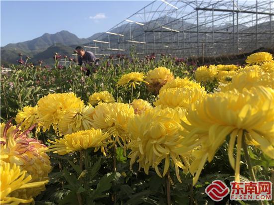 图为黄半球 刘惠萍 摄.jpg