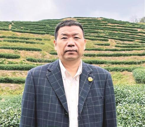 茶产业加速驶入快车道——记市政协委员李志忠